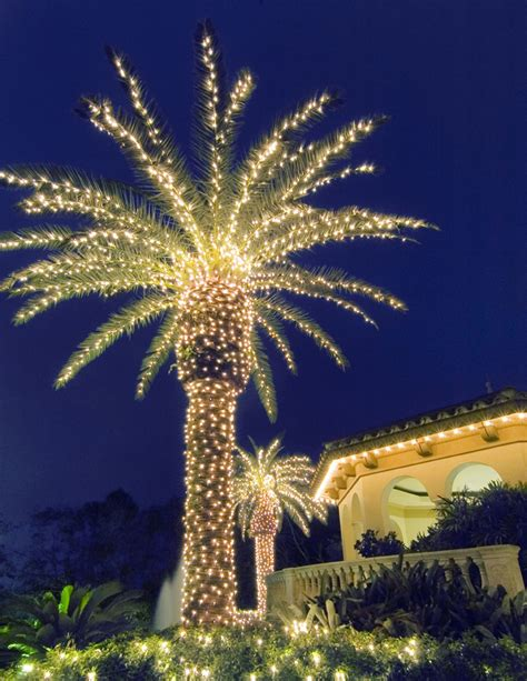lighting palms trees creates a paradise in your evening landscape outdoor lighting
