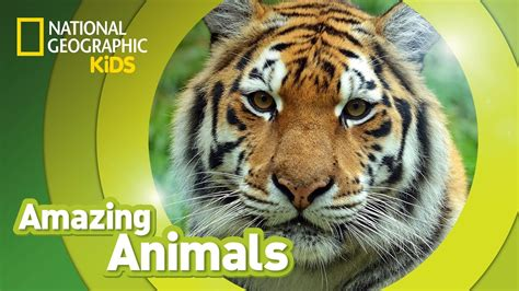 Kids National Geographic Amazing Animals