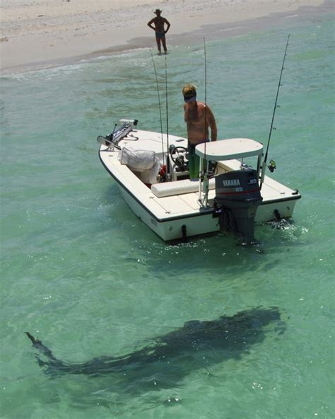 shark nokomis beach  located  casey key