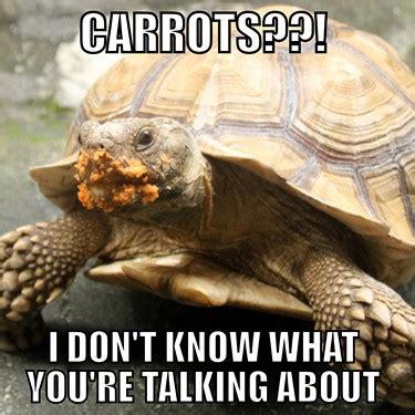 Tortoise Meme - tortoise memes