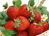 Are Strawberries Fruit