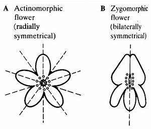 Radial Symmetry Organisms images