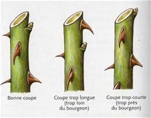 Comment Tailler Les Rosiers : pepinieres du bois de pieton la taille des rosiers ~ Nature-et-papiers.com Idées de Décoration