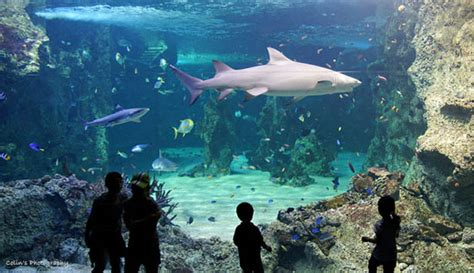sea sydney aquarium traveling to sydney australia with the family osmiva