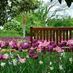 Wann Pflanzt Man Hortensien : wann pflanzt man tulpen hyazinthen narzissen co haushaltstipps und gartentipps ~ Yasmunasinghe.com Haus und Dekorationen