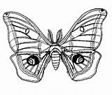 Insect Papillons Stylized Coloriage Butterfly Cocon Coloriages Imprimer Papillon Coloring Chenille Nuit Colorier Animaux Insecte Mandala Dessin Buzz2000 Printable Nature sketch template