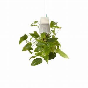 Boskke Sky Planter : boskke sky planter clear small boskke touch of modern ~ Orissabook.com Haus und Dekorationen