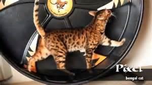 cat exercise equipment cat on hamster wheel meme