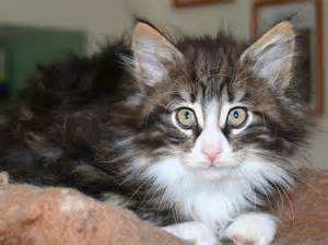 forest cat rescue forest kittens bedale