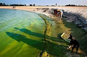 Algae Toxins In Drinking Water Sickened People In 2 ...