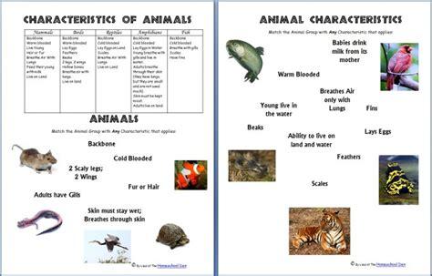 science worksheets animals   characteristics