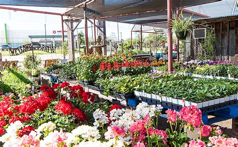 olive garden san angelo how to start a plant nursery in thenurseries