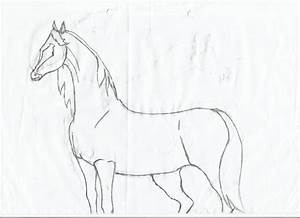 Easy Horse Drawings In Pencil For Kids