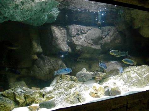 Aquascaping Cichlid Aquarium by Aquascape Idea Lake Malawi Mbuna Biotope Aquarium
