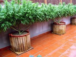 ten tips that will make your balcony or terrace cannabis With katzennetz balkon mit led indoor garden