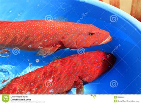 grouper water market china amoy aquatic underwater