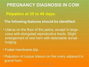 Pregnancy Diagnosis In Cow Lecture 6