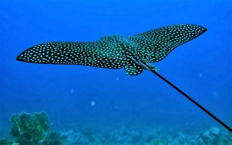 fotografias de animales marinos fotos bonitas de amor