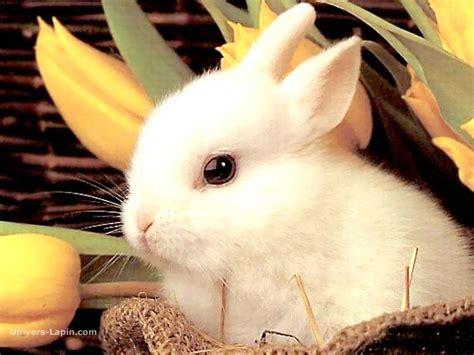 cuisiner un lapin au vin blanc un peut de tendresse pour toutes et tous