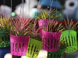 Suspension Pour Plante : suspension plante mat riaux mod les accessoires ooreka ~ Premium-room.com Idées de Décoration
