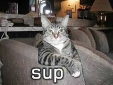Funny Cat Pics Try Not To Laugh Or Grin Youtube