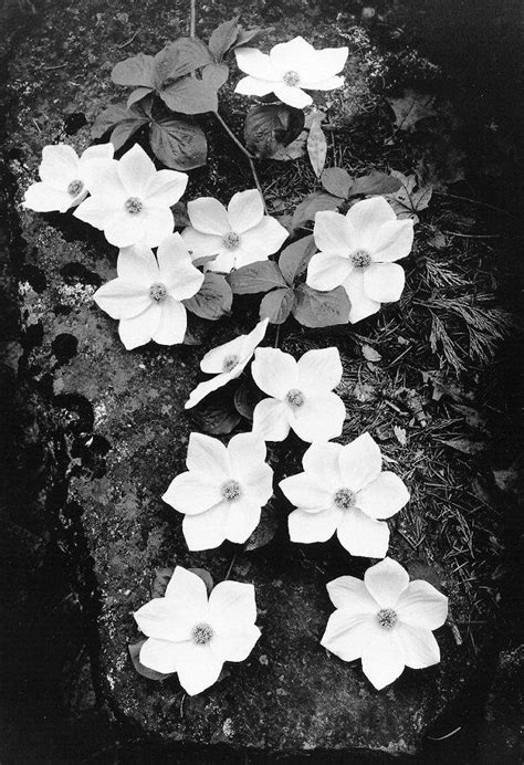 ansel adams photography flowers