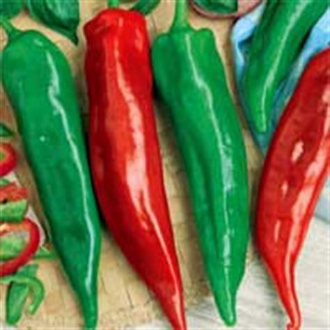 homegrown harvest vegetables