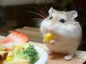What the Pets!?: The Cutest Hamster Photo!