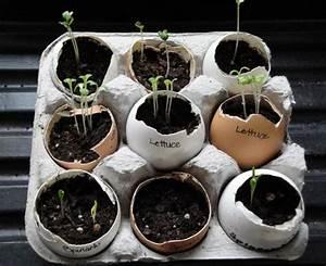 Boite A Oeufs Originale : les 92 meilleures images du tableau jardin sur pinterest potager astuce jardin et jardin potager ~ Nature-et-papiers.com Idées de Décoration