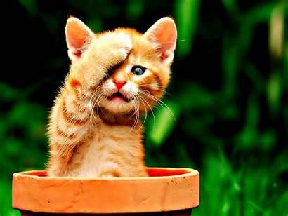 Cats Orange Cat Kitten Kittens Kitty Funny