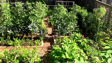 what to grow in a garden 9 easy tips to grow a lot of food in a small garden eco