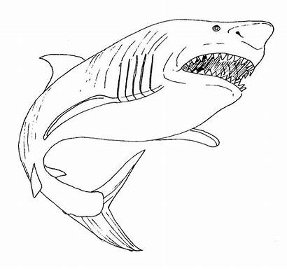 Shark Coloring Bull Printable