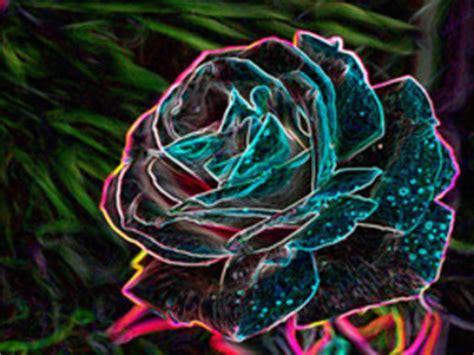 ManyCam Effect: neon rose sb