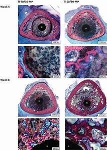 Representative Histological Images  5x Magnification  Of