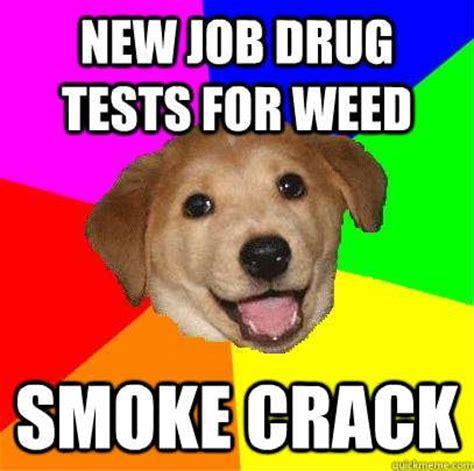 Smoking Crack Meme - smoke crack funny dog on weed pinterest