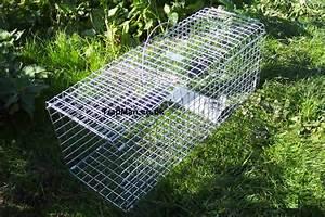 Feral Pigeon Trap  Multi Catch Feral Pigeon Trap The Trap