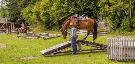 Trail Training Pferd