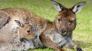 Marsupial | San Diego Zoo Animals & Plants