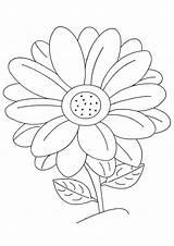 Margarita Flor Dibujos Colorear Imprimir Categorias sketch template