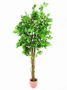 Ficus Benjamini Pflege Gelbe Blätter : ficus benjamini multi stamm k nstliche ~ Lizthompson.info Haus und Dekorationen