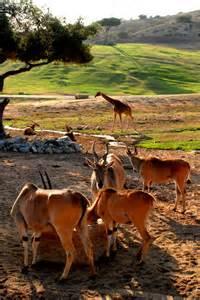 Wild Animal Park San Diego California