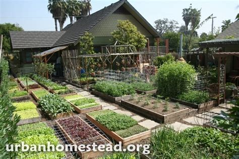 Self Sufficient Backyard - how to grow 6 000 lbs of food on 1 10th acre home design