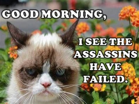 Grumpy Cat Good Morning Meme - 503 best grumpy cat images on pinterest funny animals funny animal and funny things