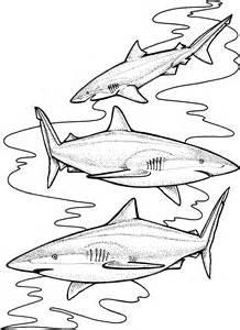 lemon shark coloring page image