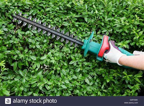 Garten Hecke Trimmen Mit Elektrischen Heckenschere