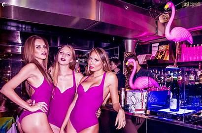 Cavalli Flamingos Milano Mi