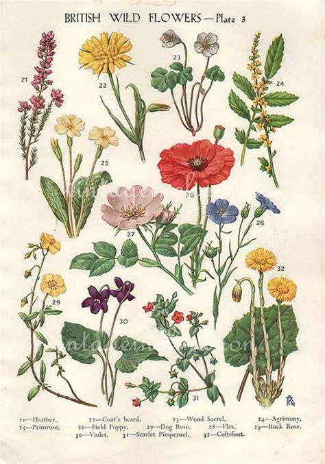 botany flowers antique botanical print british wild flowers bookplate vintage botanical flowers bookplate art