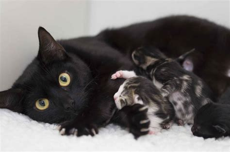 Make This Sunday Moggy Mother's Day Urges Cats Protection