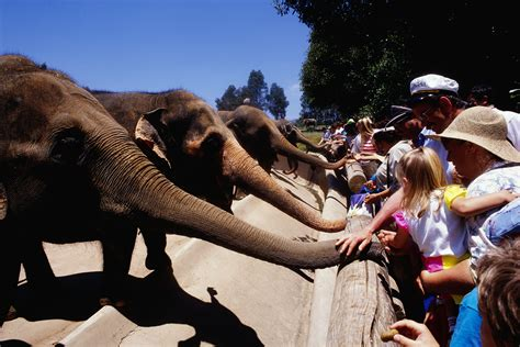 zoo san petting diego disneyland elephants zoos california planner gerald french getty america tripsavvy vacation
