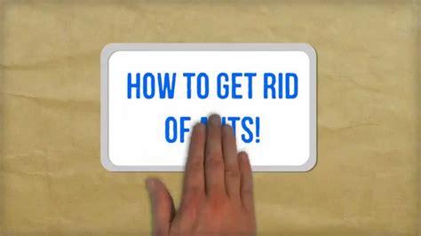 rid  ants naturally  tips
